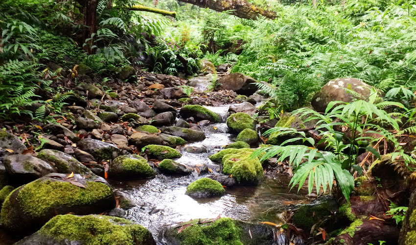 A photo of a mixed streambed of bedrock and alluvial cover in Waianaia Gulch on the wet-side of Kohala Peninsula.