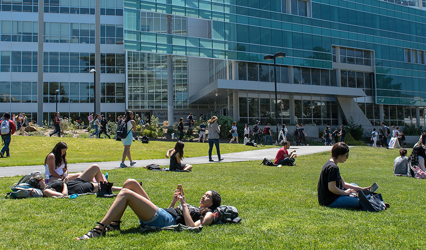 Students studying on the lawn in front of the library.