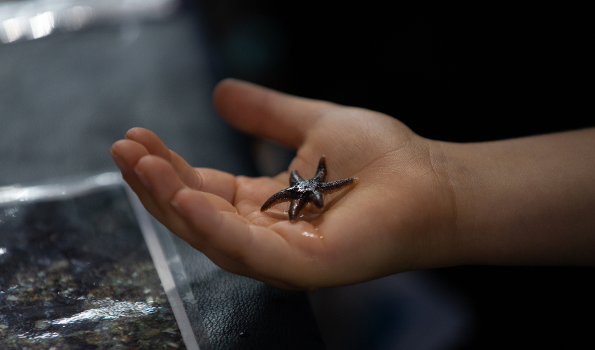 A child's hand holding a small sea star