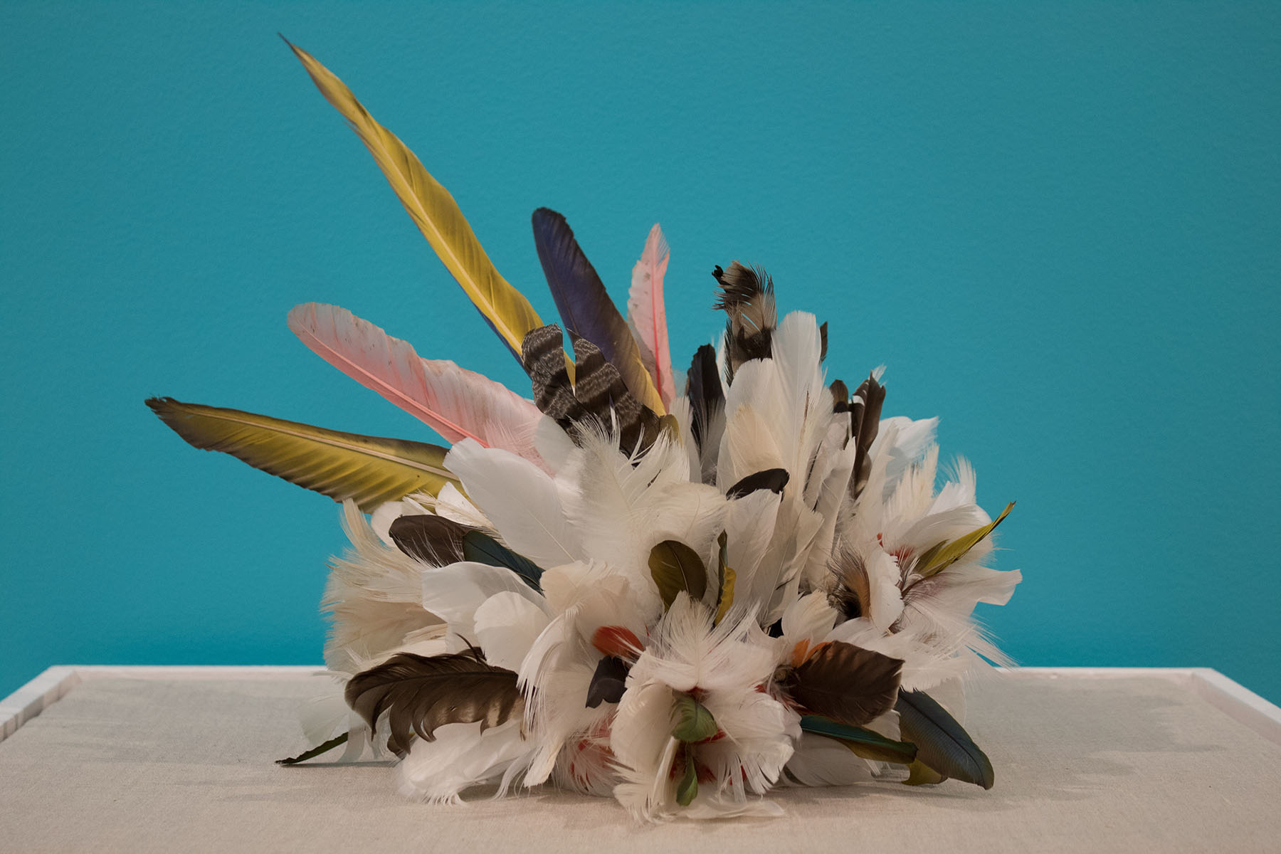 Art piece: clump of feathers