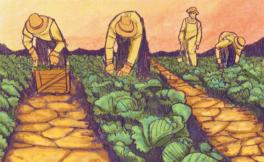 Illustration of farmworkers in the field working.