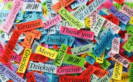 "Strips of different colored paper scattered everywhere. On each paper is a word for ""thank you"" in different languages."