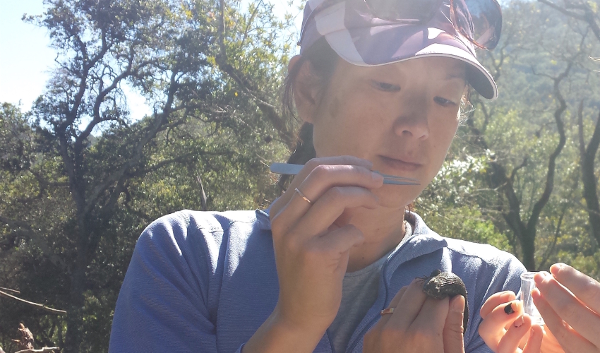 Woman wearing purple pullover and hat holds a pair of tweezers and a small lizard, with a forest in the background