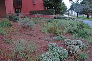Photo of a bioswale between the Science an HSS buildings.