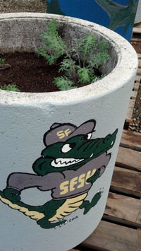 A photo of old concrete bins that have been painted and turned into planters.